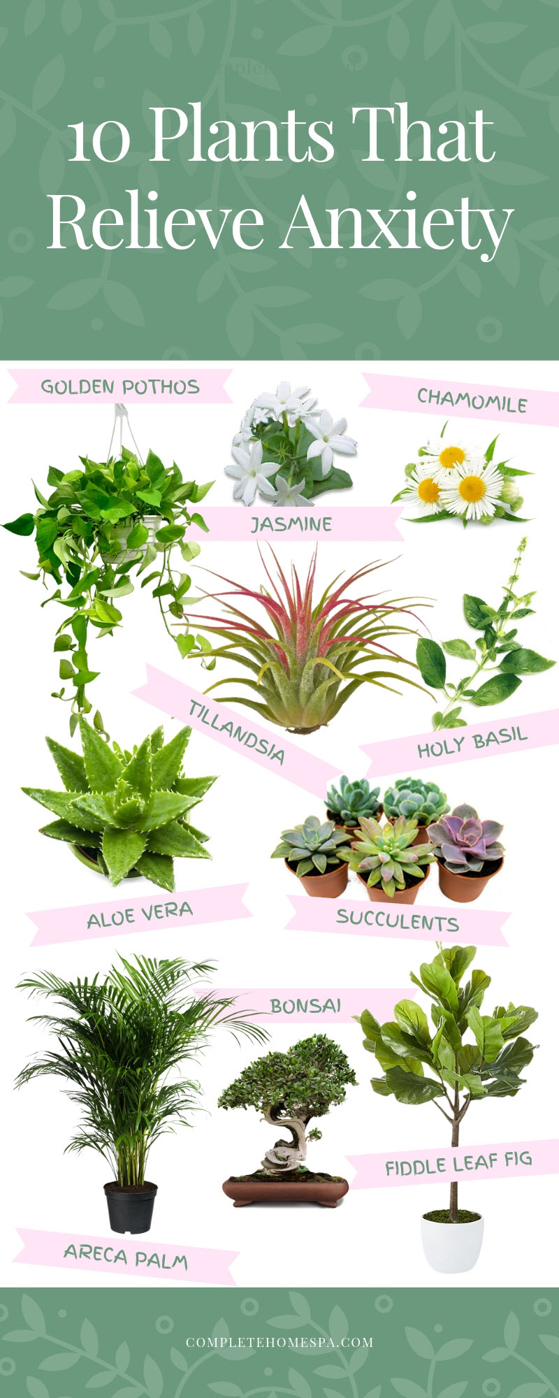 plants for stress relief