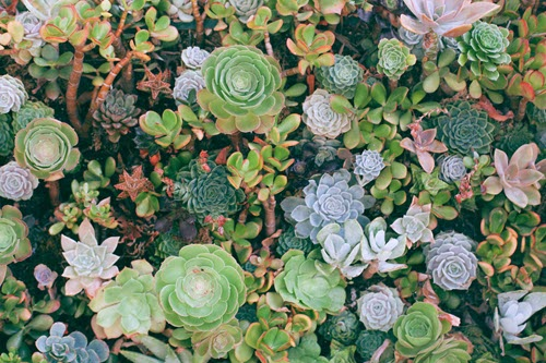 plants for anxiety