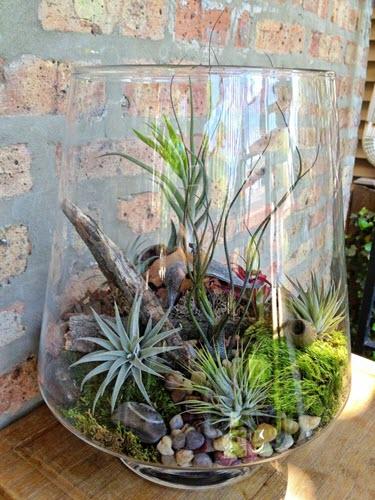 terrarium with airplants